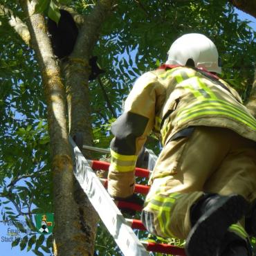 Katze von Baum gerettet (21.09.2019)