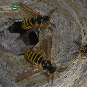Insekten (05.07.2020, 13:34 Uhr)