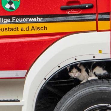 """Katze """"blockiert"""" Löschfahrzeug (20.05.2021, 13:40 Uhr)"""
